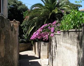 Croatia Photography, Europe, European, Alleys, Streets, Coastal Living, Pink Bougainvillea