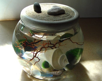 NEW! Big. Zen Garden. Japan Wonder Shell. with Beach Stones or Opalite. Marimo Ball Terrarium