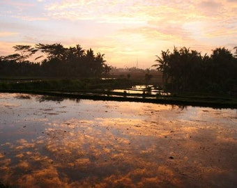 Bali Treasures - Golden Clouds (reflection pond Bali travel photography print, exotic rice field purple gold sunset zen peaceful meditation)