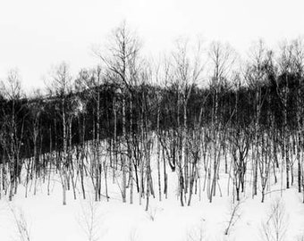 Dark & Twisty - Beyond (black and white nature photography print, creepy spooky snarly tree branches hill snow landscape wall art decor)