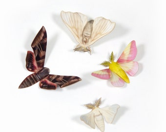 Papercut Small Moth Decorations