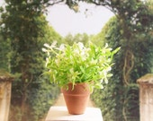 Green Plant White Flower Potted Floral 1:12 Dollhouse Miniature Artisan