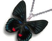 Real Butterfly Wing Necklace / Pendant (WHOLE Necyria Duellono Butterfly - W110)