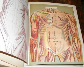 Antique 1914 Huge Book Health and Longevity Human Phrenology Full Body Lift Up Fold Out Medical Chart Pages hundreds of lithos and Photos