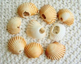 9 Pendant Size Ridged Scallop Shells with Natural Holes (SH68) Mediterranean sea shells, Shells with texture