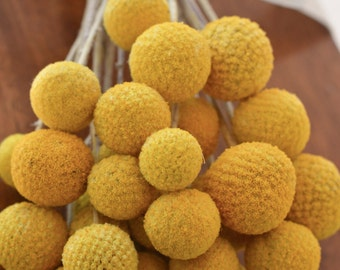 Wholesale billy balls, 200 stems dried billy balls, craspedia, bunch of craspedia, billy buttons, Yellow Dried decor, modern decor