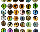 animals eyes 1x1 inch circles digital download collage sheet image graphics for bottle cap pendants magnets scrapbooking