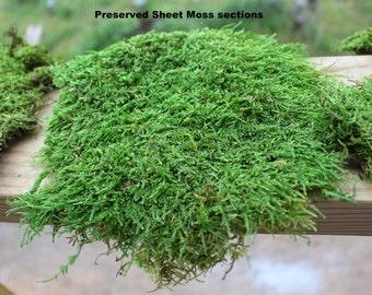 Preserved Moss Samples-quart Bag of Moss you choose type & color-Fern moss-Sheet moss-Secret Gardens-Wedding Moss-Dried moss