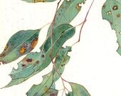 Eucalyptus: Gabby Malpas watercolour C6 greeting card and envelope