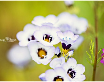 Spring White and Purple Blossoms Flower Fine Art Canvas wrap- macro 3