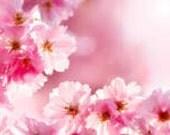 1 oz  Cherry Blossom Fragrance oil