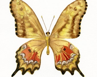 Golden Butterfly, original watercolor and gouache
