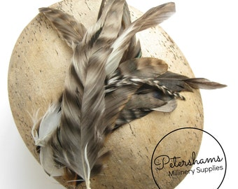 12 Coque Chinchilla Feathers for Millinery and Hat Trimming - Natural
