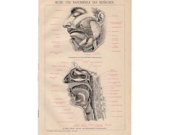 1894 MOUTH & NASAL CAVITY anatomy original antique human anatomy medical lithograph print