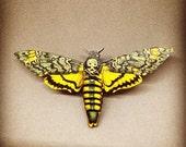 Death-Moth Be Brooch