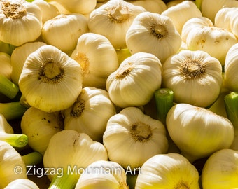 Garlic at the market.  Vegetable wall art or kitchen wall art from food photography.  Fine art print for kitchen decor or wall art.