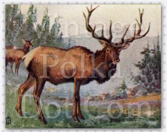 Clip Art Digital Elk Nature Print Vintage Printable Instant Download 8.5 x 11 inches Scrapbooking Craft Graphics Antique Paper Clip Art