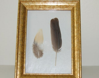 Framed Bird Feathers White & Gold