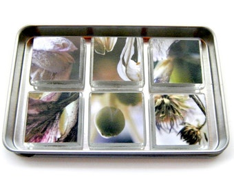 Magnets, Green and Purple Dried Flower Images, Set of 6 1 inch Glass Tiles