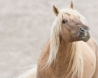 Corona's Attitude - Fine Art Wild Horse Photograph - Wild Horse - Corona - Sand Wash Basin - Fine Art Print