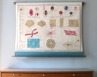 Early 20th Century Jurica Animal Cells Series Pull Down Chart JZS15 and JZS16