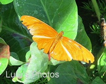 Butterfly Image, Nature Photography, Prints and Cards