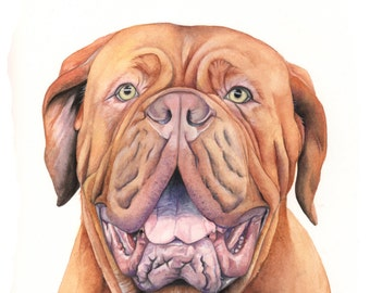 French Mastiff print of watercolour painting FM2415- 5 by 7 size print - dog art - pet art- pet lover