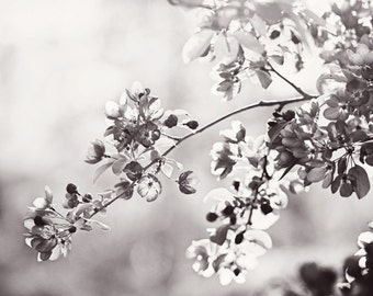 "Black and White Floral Photography, flower grey art print branches picture light gray nature artwork botanical, ""Blown by the Spring Breeze"""