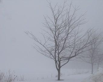 tree in fog   8 x 10 photo