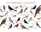 New Jersey Backyard Birds Field Guide Art Print / Watercolor Painting / Wall Art / Nature Print / Bird Poster