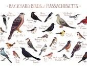 Massachusetts Backyard Birds Field Guide Art Print / Watercolor Painting / Wall Art / Nature Print / Bird Poster