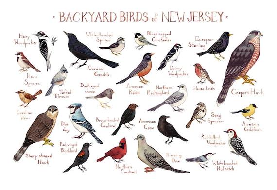 New Jersey Backyard Birds Field Guide Art Print / Watercolor