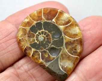 Ammonite fossil cabochon.  31 x 25 x 4.7
