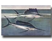 "Sailfish Art, Antique Fish Print (Vintage Fishing Wall Decor, Boyfriend Gift for Men) ""Cresting Sail Fish"" #203"
