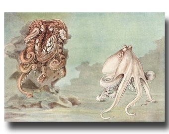"""Octopus Wall Art, 1930s Octopus Watercolor Print, Vintage Octopus Home Decor --- """"Octopus Camouflauge"""" Gifts No. 206"""