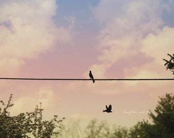 Bird on a Wire Fine Art Photography Sunset Sunrise Sky Blue Black Pink Green Rainbow Nature Home Decor Wall Art