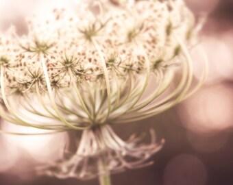 Botanical Print Queen Annes Lace Field Flowers Vintage Feel Flora Sepia Dusky Pink Tones, Fine Art Print
