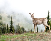 Deer in the Clouds, Olympic National Park, 8 x 10 Photography