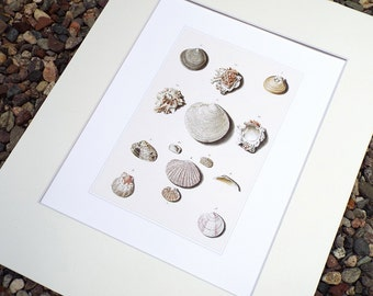 Sea Shell Collection 2 in Pale Pink, Taupe & Ivory Naturalist Study Archival Print on Watercolor Paper