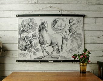 Horse Chart / Vintage Reproduction / Canvas Fabric or Paper Print / Oak Wood Hanger with Brass Hardware / Organic Milk Paint & Wax Finish