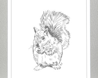 Squirrel - Pencil Sketch - Print