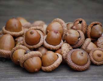 Natural acorns, Real Acorn  Wedding Fall Thanksgiving, Holiday Christmas Decoration, Home Decor, Craft Supplies,