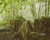 Highgate Cemetery Fine Ar...