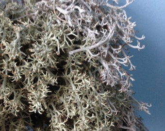 LICHEN – wildharvested, organic, natural colour, dried deer moss