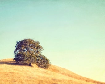 Tree Photograph Sonoma California Sky Gold Grass, Fine Art Print, Large Wall print
