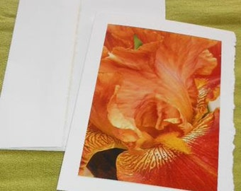 Orange Rust Iris Flower Photo Blank Notecard with Deckle Edge - #IRIS008