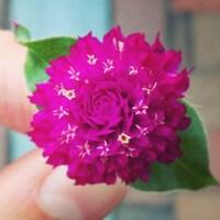 wildflowermade