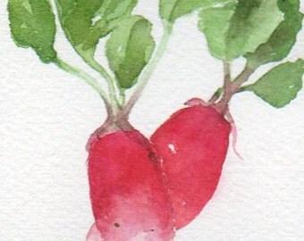 Radishes, vegetable miniature, original watercolour painting