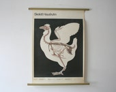 Vintage.  Pull down chart. Botanical. School.  Science.  Poster.  Mid Century German DDR.  Educational. Canvas. Skeleton Chicken (402)