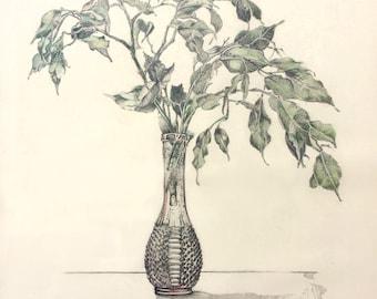 Still life - Ficus plant in vase.